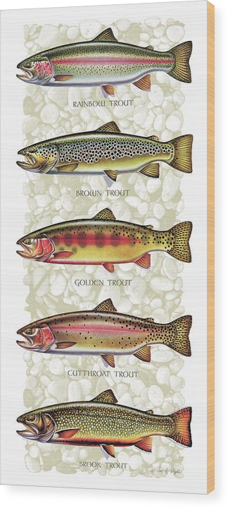Five Trout Panel by JQ Licensing