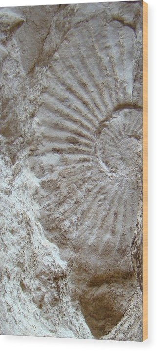 Fossil Wood Print featuring the photograph Fossil One by Ana Villaronga