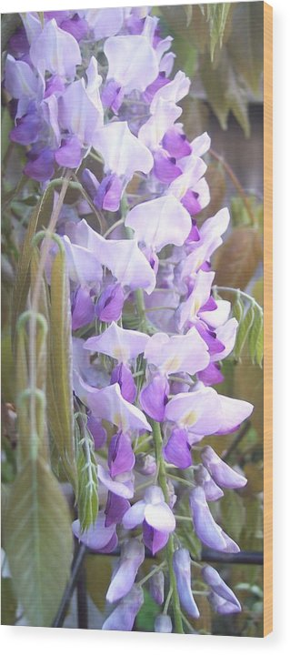 Wisteria Wood Print featuring the photograph Wisteria by Jean Booth