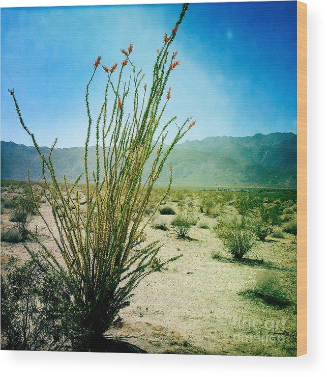 Tree Wood Print featuring the photograph Borrego Desert by Kathlene Pizzoferrato