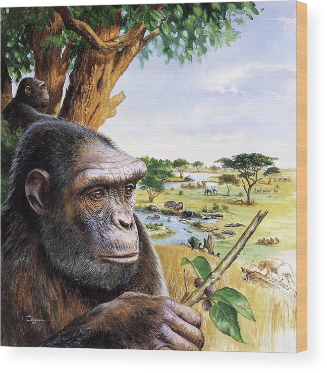 Toumai Wood Print featuring the photograph Early Hominid by Christian Jegou Publiphoto Diffusion/ Science Photo Library