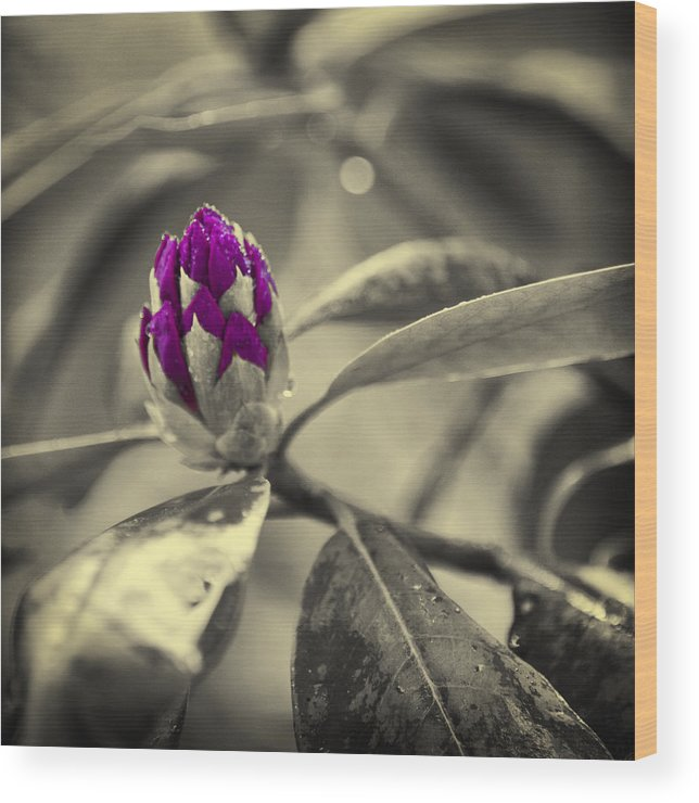 Rhododendron Wood Print featuring the photograph Rhododendron by Ken Kessler