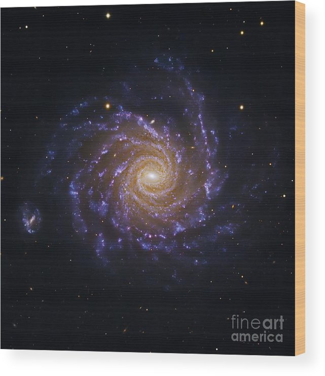 Astronomical Wood Print featuring the photograph Spiral Galaxy Ngc 1232, Optical Image by Robert Gendler