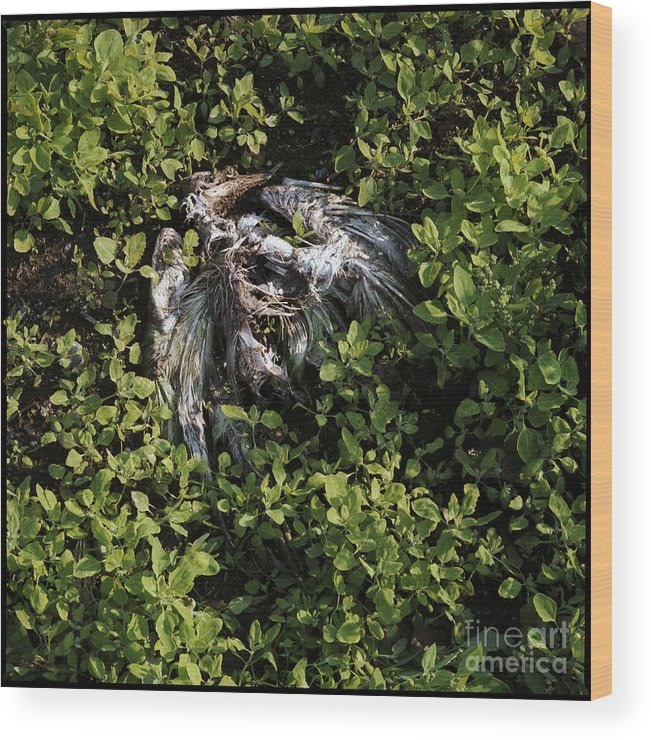 C013103 Wood Print featuring the photograph White Feather And Green by Ty Lee