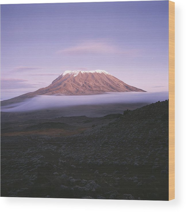 Africa Wood Print featuring the photograph A View Of Snow-capped Mount Kilimanjaro by David Pluth