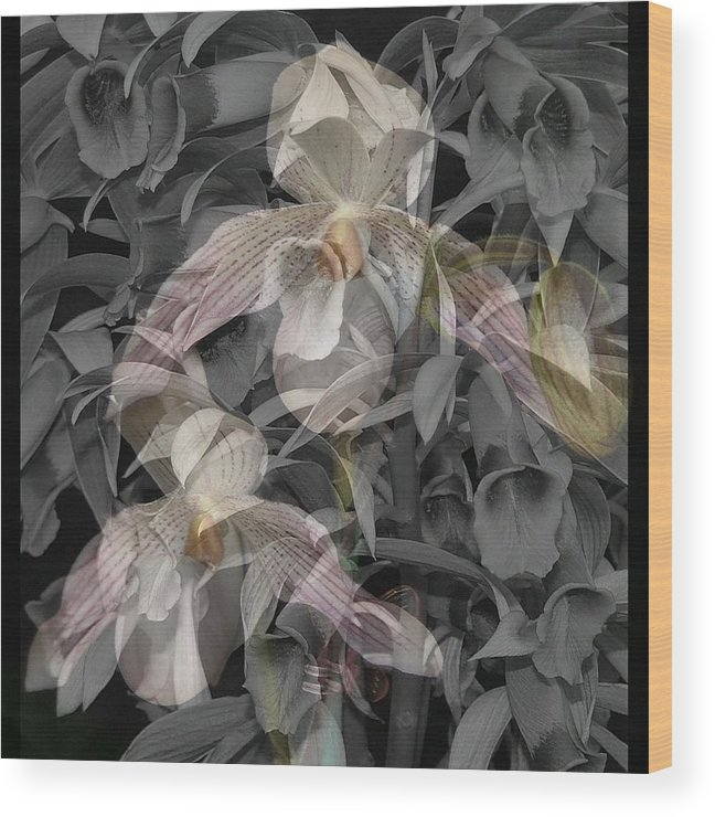 Orchid Wood Print featuring the photograph Angelic Hosts The Hooded Nun Orchid by Mindy Newman