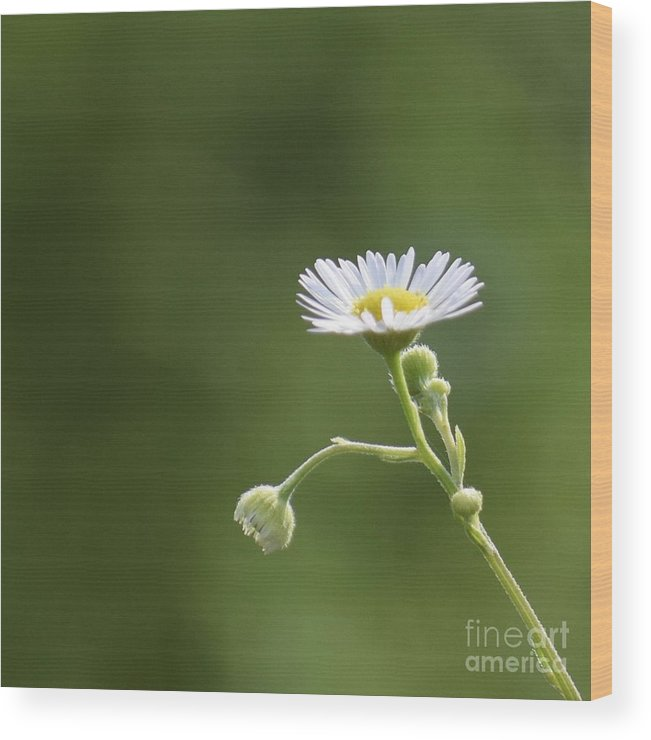Cute Wood Print featuring the photograph Cute One by Anita Goel