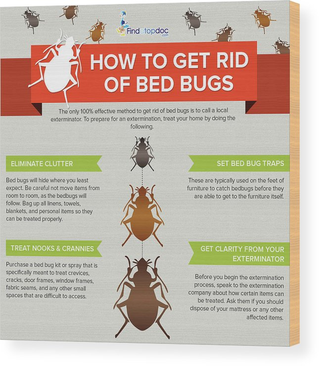 How To Get Rid Of Bed Bugs Wood Print By Findatopdoc