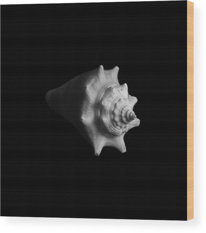 Seashell Wood Print featuring the photograph Shell No. 4 by Henry Krauzyk