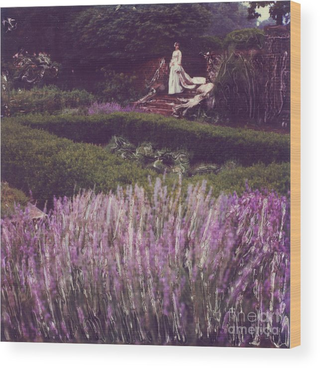 Polaroid Wood Print featuring the photograph Twilight Among The Lavender by Steven Godfrey