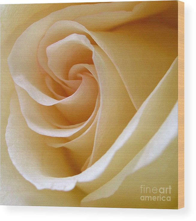 Rose Wood Print featuring the photograph White Rosebud by Addie Hocynec