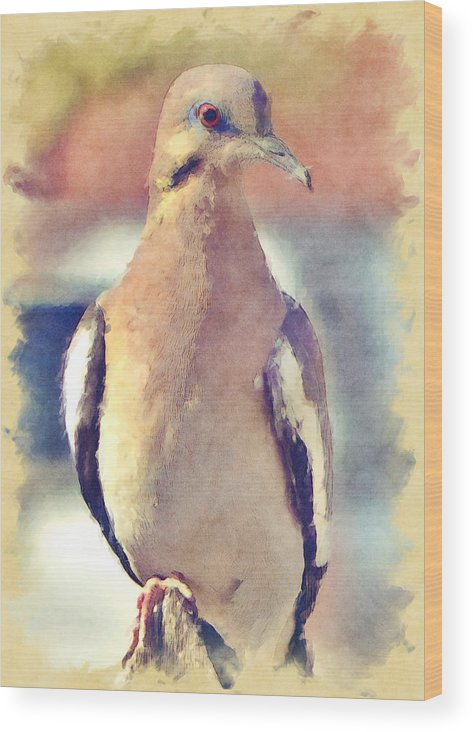 Dove Wood Print featuring the photograph White-Winged Dove by David G Paul