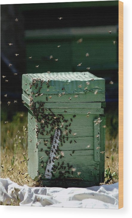 Animal Wood Print featuring the photograph Beehive by Pascal Broze/reporters/science Photo Library