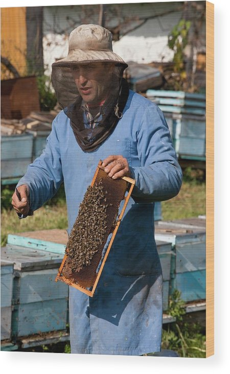 Beekeeper Wood Print featuring the photograph Beekeeper by Bob Gibbons/science Photo Library