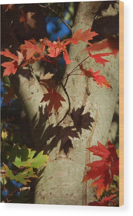 Autumn Wood Print featuring the photograph Carolina Autumn by Suzanne Gaff