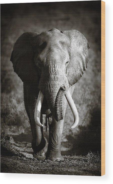 Elephant Wood Print featuring the photograph Elephant Bull by Johan Swanepoel
