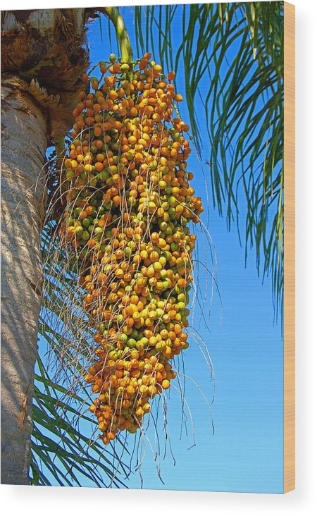 Palm Wood Print featuring the photograph Fruit of The Queen Palm by Donna Proctor