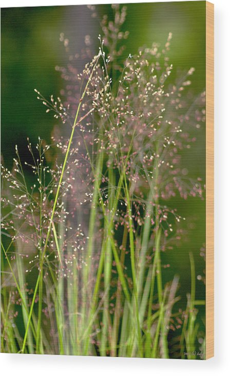 Floral Wood Print featuring the photograph Memories of Springtime by Holly Kempe