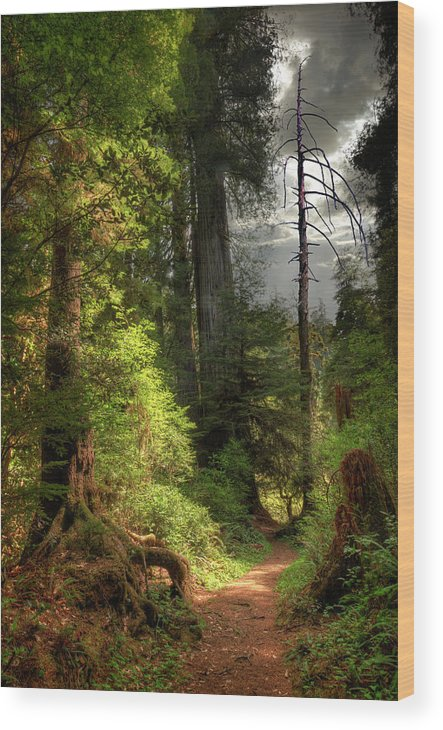 Tranquility Wood Print featuring the photograph Path Through Redwood Forest by Ed Freeman