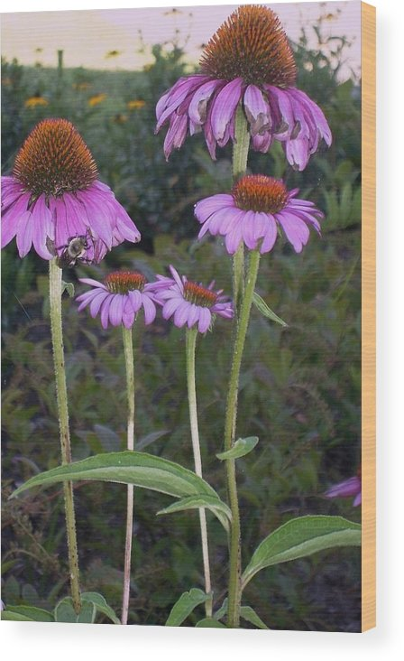 Photography Wood Print featuring the photograph Purple cone flowers and bee by Joseph Ferguson