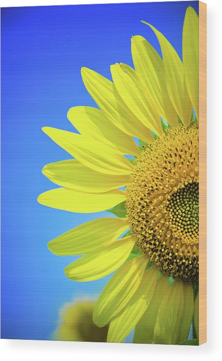 Clear Sky Wood Print featuring the photograph Sunflower Against Blue Sky by N. Umnajwannaphan
