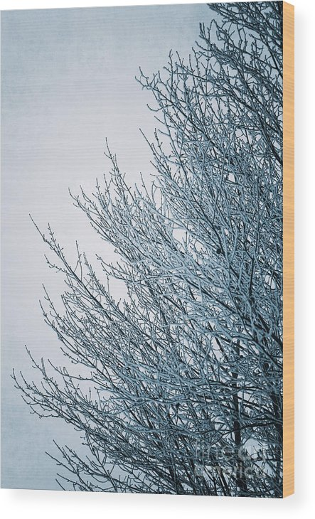 Winter Wood Print featuring the photograph Crusted With Winter by Ever-Curious Photography
