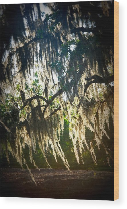 Spanish Wood Print featuring the photograph Spanish Moss by Beth Gates-Sully