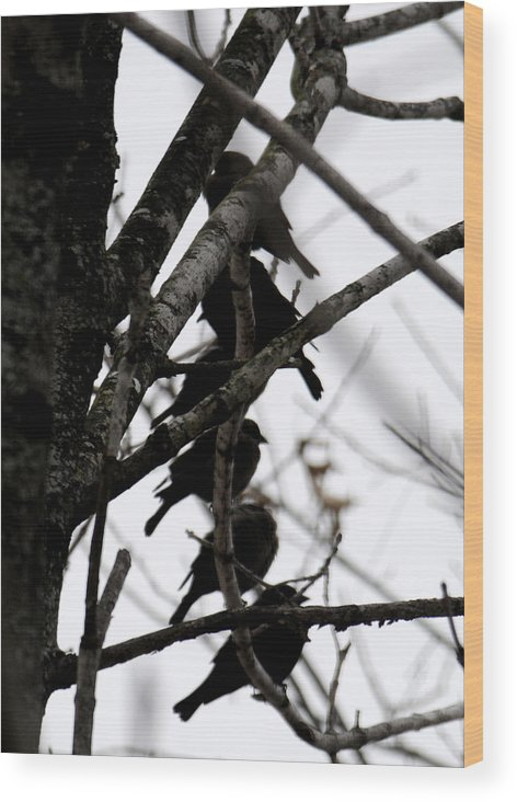Black Birds Wood Print featuring the photograph Stacked by Wanda Brandon