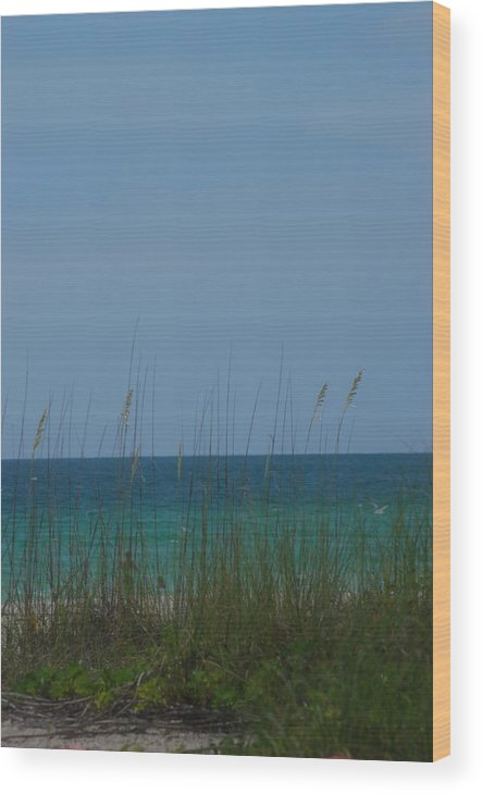 Landscape Wood Print featuring the photograph Holmes Beach Florida 2 by Lisa Gabrius