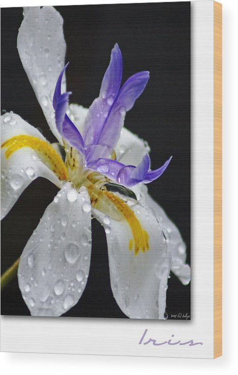 Flowers Wood Print featuring the photograph African Iris by Holly Kempe