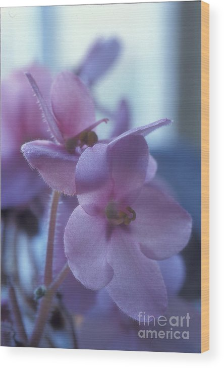 African Wood Print featuring the photograph African Violets in the Window by Keith Gondron