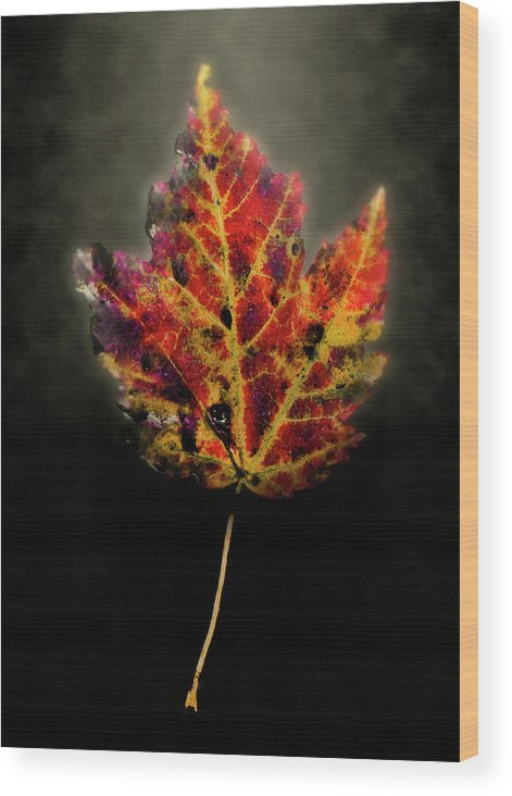 Leaf Wood Print featuring the photograph Autumn by Jim Painter
