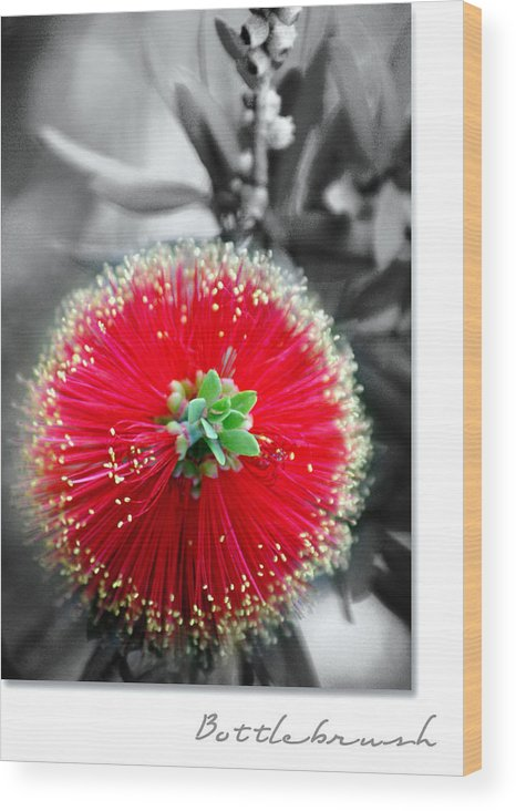 Nature Wood Print featuring the photograph Bottlebrush Callistemon by Holly Kempe