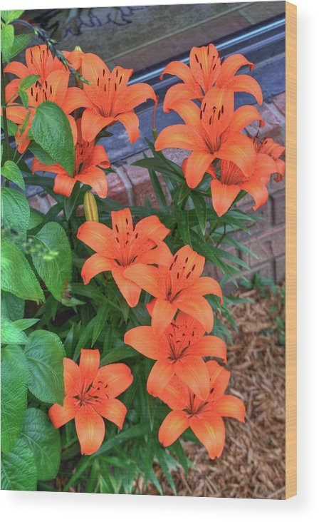 Bunch Wood Print featuring the photograph Bunch Of Orange Lilies by Douglas Barnett