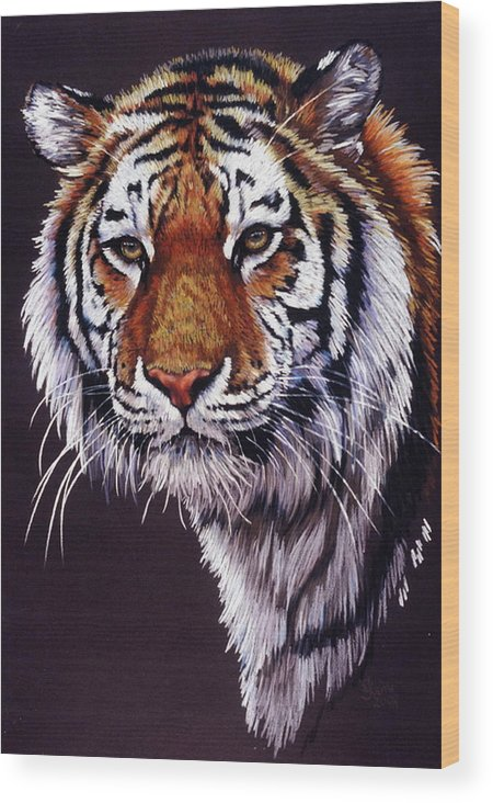 Tiger Wood Print featuring the drawing Desperado by Barbara Keith
