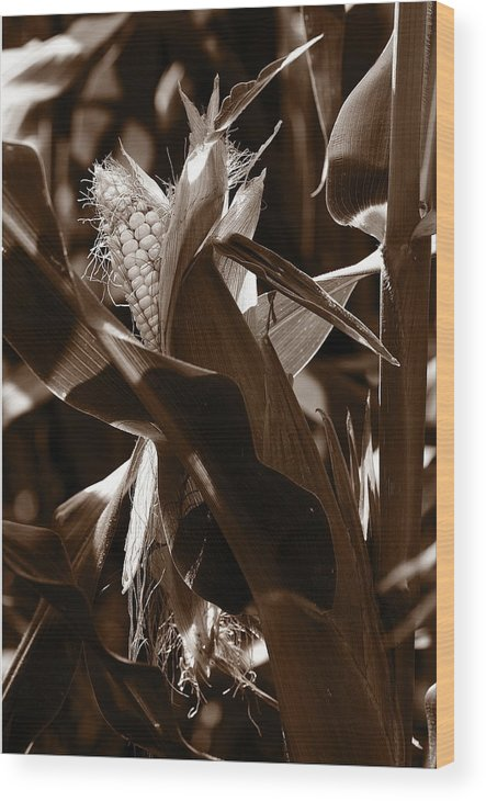 Farm Wood Print featuring the photograph Ears To You Corn - Sepia by Angela Rath