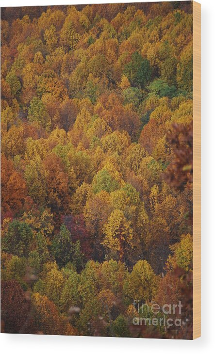 Fall Wood Print featuring the photograph Fall Cluster by Eric Liller