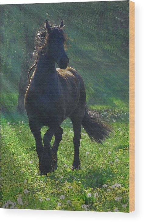 Horses Wood Print featuring the photograph Friesian Sun by Fran J Scott