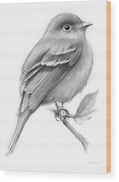 Least Flycatcher Wood Print featuring the drawing Least Flycatcher by Greg Joens