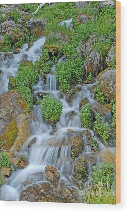 Logan Canyon Wood Print featuring the photograph Logan Canyon Cascade by Dennis Hammer