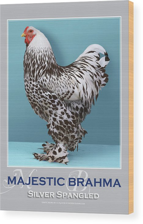 Poultry Wood Print featuring the digital art Majestic Brahma Silver Spangled by Sigrid Van Dort
