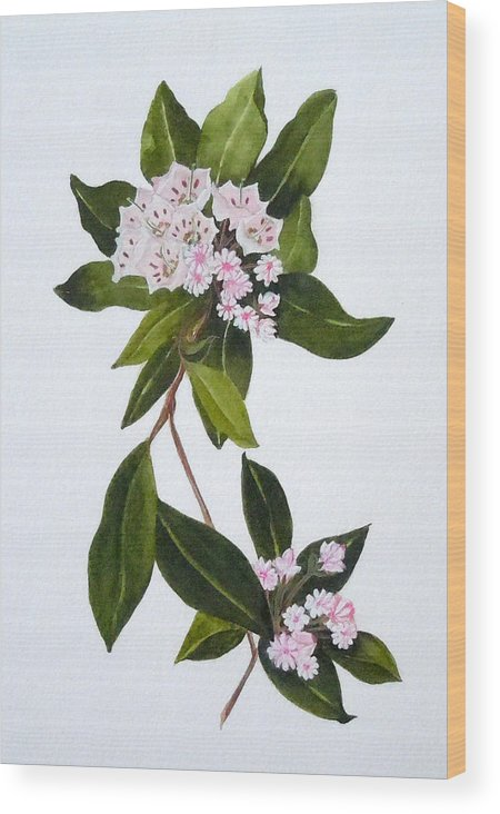 Mountain Laurel Wood Print featuring the painting Mountain Laurel by Jean Blackmer