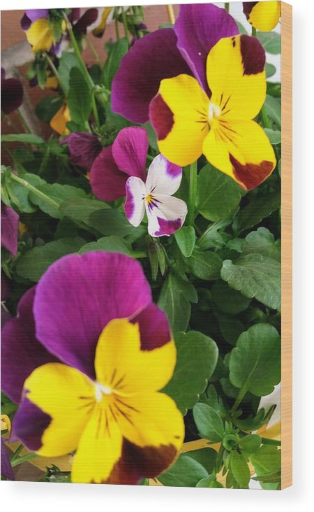 Pansies Wood Print featuring the photograph Pansies 3 by Valerie Josi