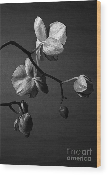 Orchid Wood Print featuring the photograph Scotopic Vision 3 - Orchid by Pete Hellmann