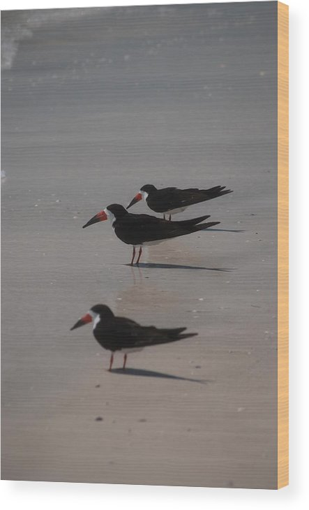 Landscape Wood Print featuring the photograph Sea Birds by Lisa Gabrius