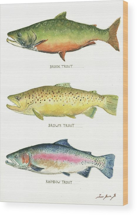 Brook Trout Wood Print featuring the painting Trout species by Juan Bosco
