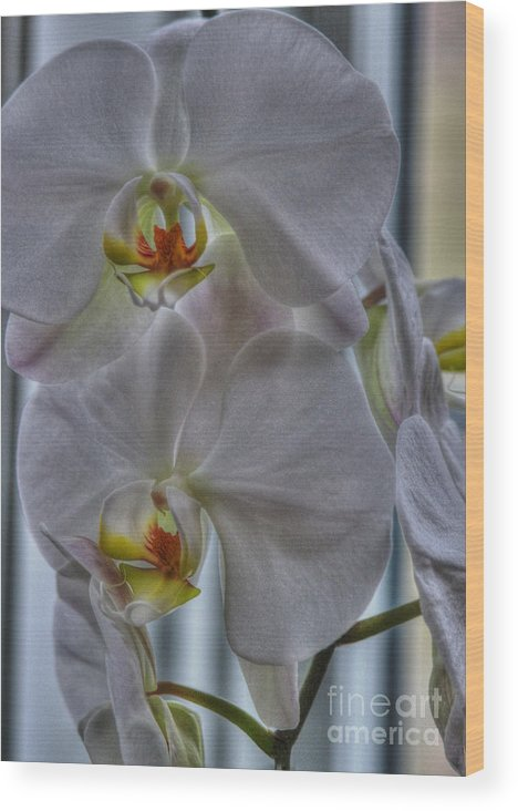 National Orchid Day Wood Print featuring the photograph White Orchids by David Bearden