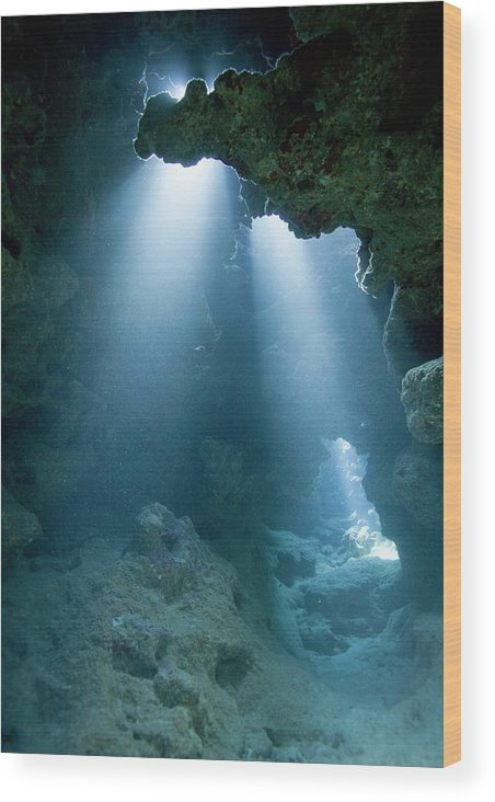 Underwater Wood Print featuring the photograph Caribbean Sea, Cayman Islands, Grand by Paul Souders