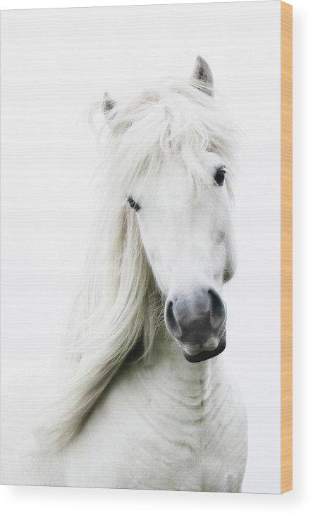 Horse Wood Print featuring the photograph Snowhite by Gigja Einarsdottir