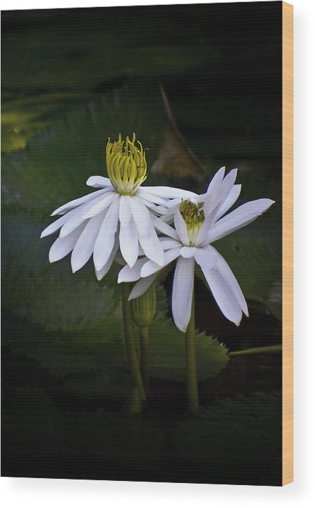Floral Wood Print featuring the photograph Togetherness by Holly Kempe